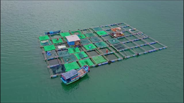 Aerial View Camera Moves Around Floating Lobster Farm