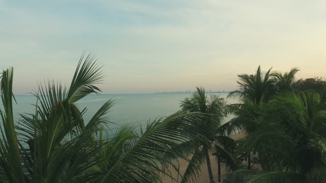 Aerial view; Coconut Palm tree with Landscape Sea surface reflection of sunrise-Dawn. Aerial view; Landscape and Sea surface reflection of sunrise-Dawn or sunset on the Beach at Bang Saray Beach, Sattahip District, Chonburi Province, Thailand. 4K Resolution. coconut palm tree stock videos & royalty-free footage