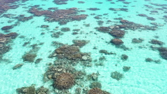 Aerial View Coral Reef Aerial View Coral Reef reef stock videos & royalty-free footage