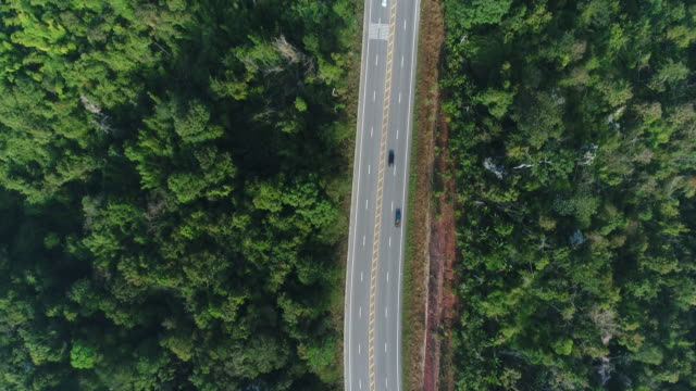 aerial view country road in forest - lituania video stock e b–roll