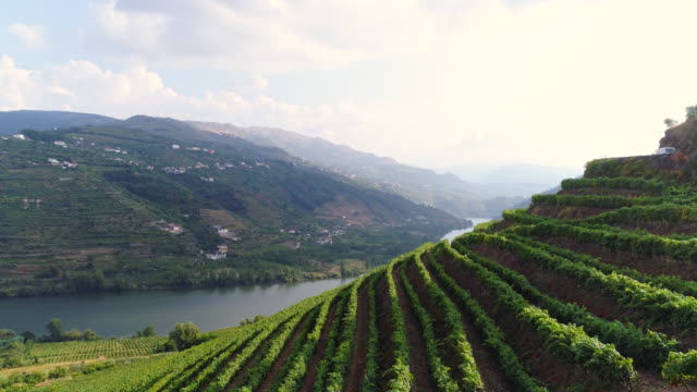 Aerial view Douro valley in sunny day