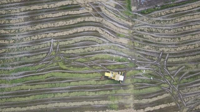luftbild adlerfliege umgibt den harvester - strohhut stock-videos und b-roll-filmmaterial