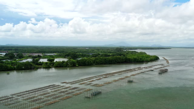 aerial view fish farm on nature river aerial view fish farm on nature river damascus stock videos & royalty-free footage