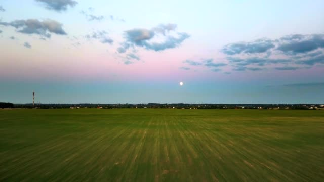 Aerial view: flight above the unripe green soybean field at sunset video