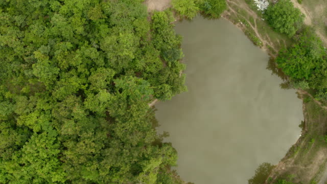 Aerial view, flight over a beautiful tranquil trees forest and wild pond