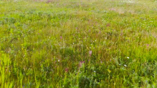 vídeos de stock e filmes b-roll de aerial view - flight over endless alpine meadows - prado