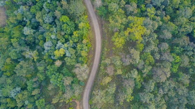 アスファルト 2 車線林道両側を成長している鬱蒼とした森の緑の木々 の上を飛んで空撮。 - 曲線点の映像素材/bロール