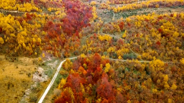 Aerial view: flying over beautiful autumn forest in Carpathian mountains. Dirty road among yellow birch and red beech trees. video