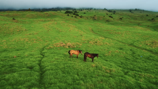 aerial view flying over horses in beautiful green countryside - paesaggio collinare video stock e b–roll