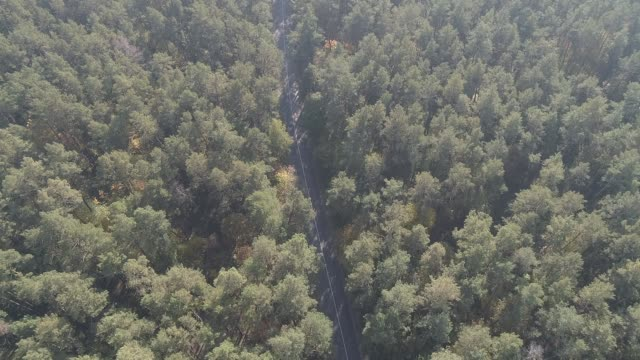 aerial view flying over old patched two lane forest road with car moving green trees of dense woods growing both sides. car driving along the forest road. aerial: car driving through pine forest - pezze di stoffa video stock e b–roll