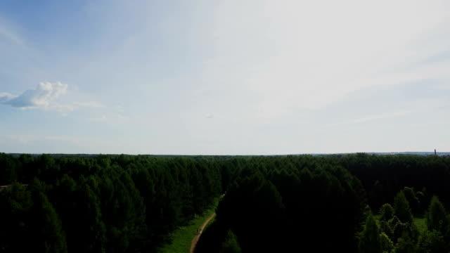 vídeos y material grabado en eventos de stock de vista aérea. volando sobre los árboles del bosque. tiro de cámara aérea. panorama de paisaje - letra s