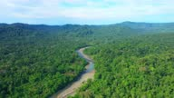 istock Aerial view following a river in a tropical forest in South America 1286852692