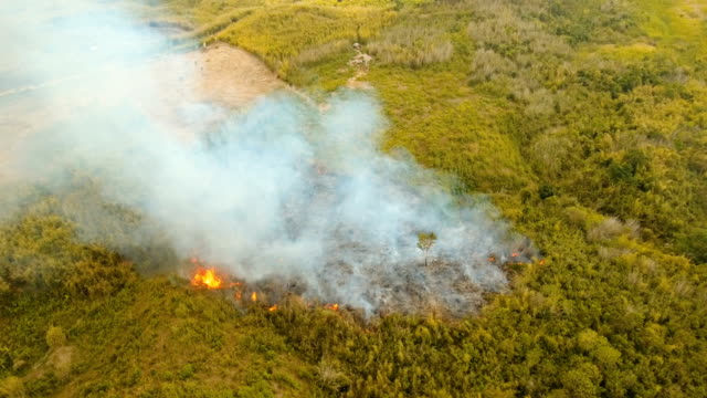 stockvideo's en b-roll-footage met luchtfoto bosbrand. busuanga, palawan, filipijnen - bosbrand