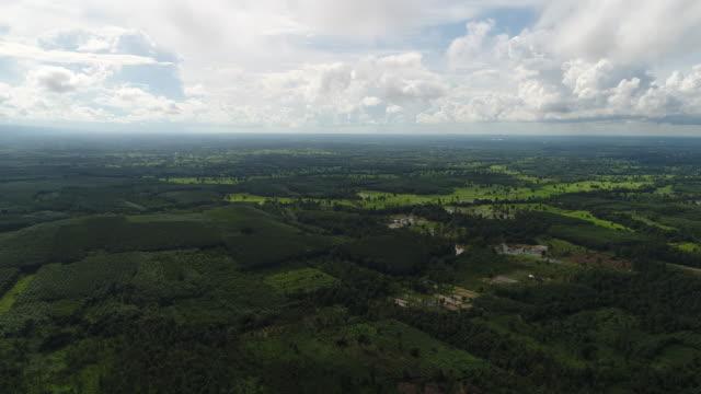 aerial view forest. - wood texture filmów i materiałów b-roll