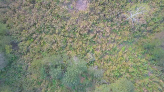 Aerial view from above of a the edge of the forest video