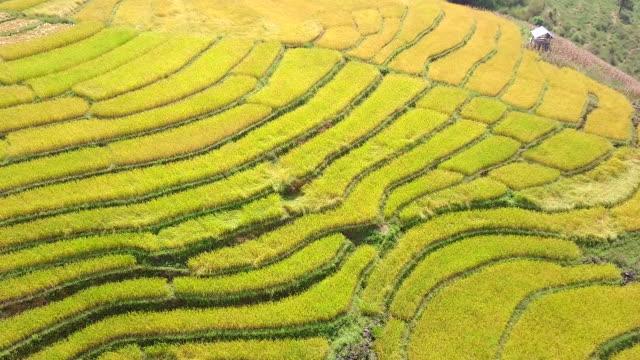 widok z lotu ptaka z tarasu ryżowego dorn field - taras ryżowy filmów i materiałów b-roll