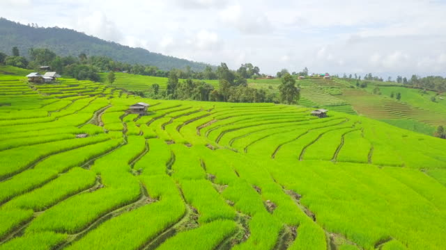 Aerial view from dorn Rice Terrace  Rice terraces at pa pong pieng in Mae Chaem, Chiang Mai, north of Thailand video
