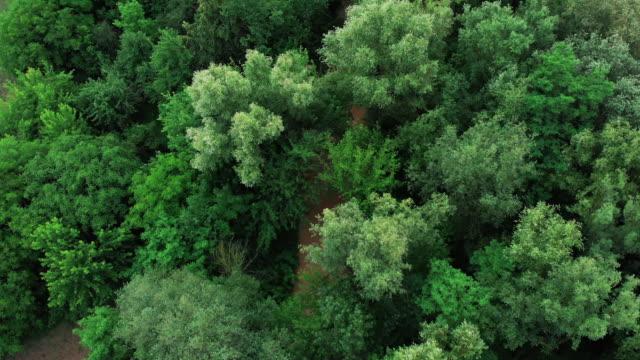 luftbild vom dröhnen der wald mit grünen bäumen. über den nord-europäischen wald erschossen. nach regen schlammig schmalen fluss - kieferngewächse stock-videos und b-roll-filmmaterial