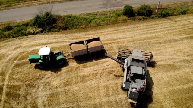 Antenn Visa grå skördetröska tömmer vete i släp vagnen tömda behållaren och vände runt börja klippa mogna gula korn öron på jordbruks mark video