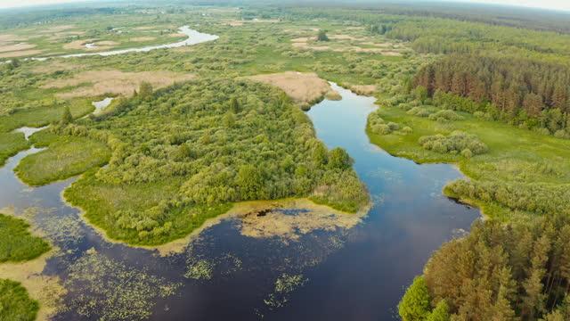 vídeos y material grabado en eventos de stock de vista aérea bosques verdes del bosque y el paisaje del río en el día de verano. vista superior de la hermosa naturaleza europea desde alta actitud en la temporada de otoño. vista de drones. vista de pájaro - bielorrusia