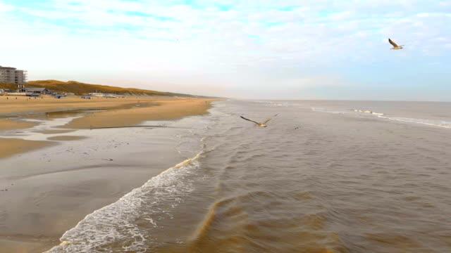 luftbild fliegen möwen über der nordsee. slow-motion 120 fps. niederlande, zandvoort vormittag am strand - schnauze stock-videos und b-roll-filmmaterial