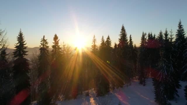 aerial view in sundown winter mountain - хвойное дерево стоковые видео и кадры b-roll