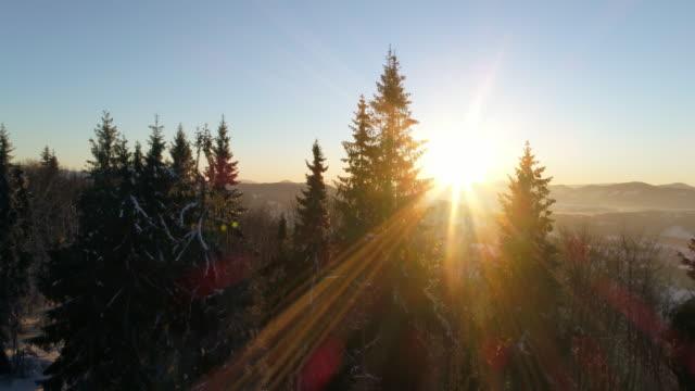 вид с воздуха на затязвую зимнюю гору - хвойное дерево стоковые видео и кадры b-roll