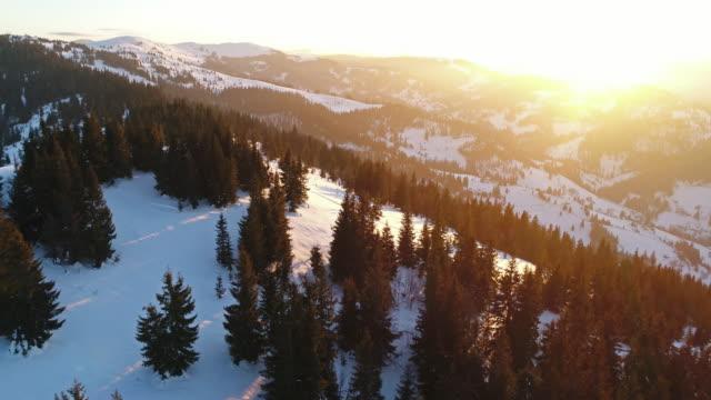 aerial view in sunrise winter mountain - хвойное дерево стоковые видео и кадры b-roll