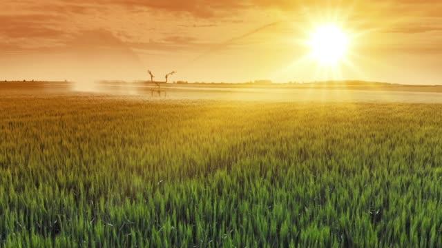 flygfoto bevattningssystem vattning vete fält vid solnedgången - värmepump bildbanksvideor och videomaterial från bakom kulisserna