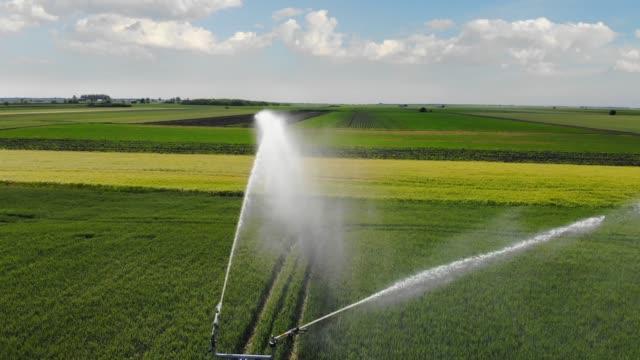 havadan görünüm sulama sistemi sulama buğday tarlası - gıda ve i̇çecek sanayi stok videoları ve detay görüntü çekimi