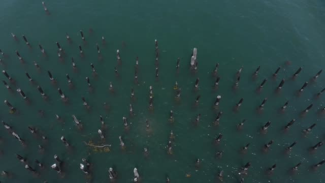 Aerial View Looking Down at Boats and Piers Along Easter Promenade video