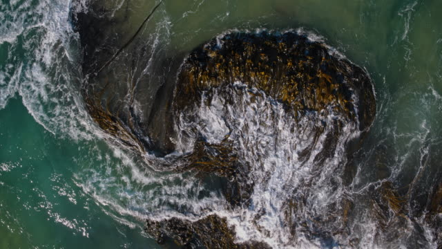 Aerial view looking down at wave crashing through kelp in ocean. abstract nature. kelp plants flowing in ocean waves. video
