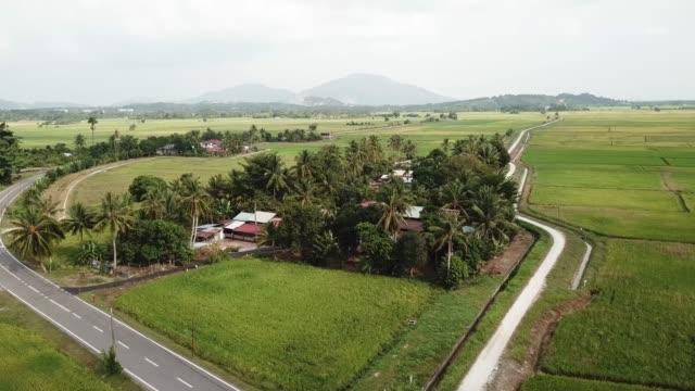 luftbild malaien haus umgeben von reisfeld - strohhut stock-videos und b-roll-filmmaterial