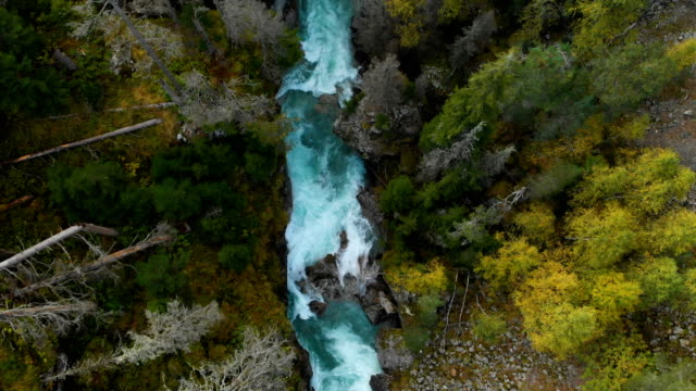 vídeos de stock e filmes b-roll de aerial view of a clean stormy mountain river in the coniferous autumn forest of the caucasian reserve. concept of conservation areas top view. - passagem de ano