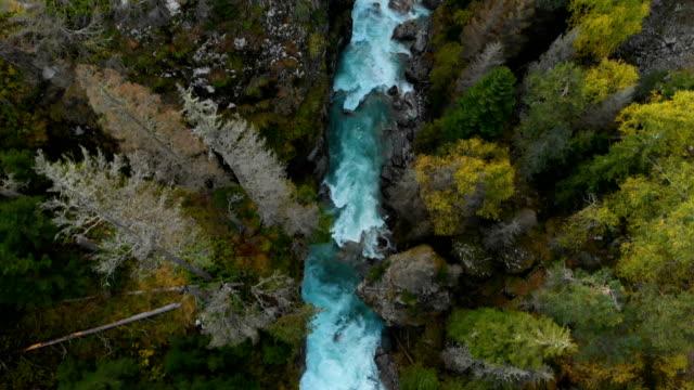 stockvideo's en b-roll-footage met luchtmening van een schone stormachtige bergrivier in het naaldbos van de herfst van het kaukasische reserve. concept van behoud gebieden top view. - bovenkleding