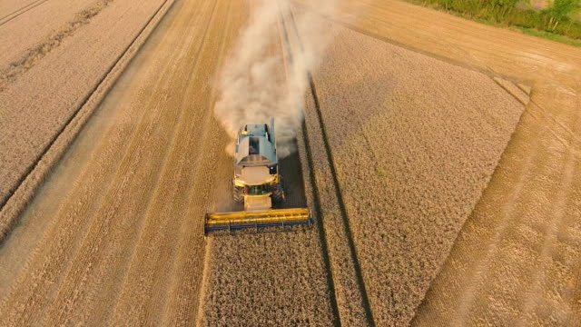 Aerial view of a combine harvester harvesting crop video