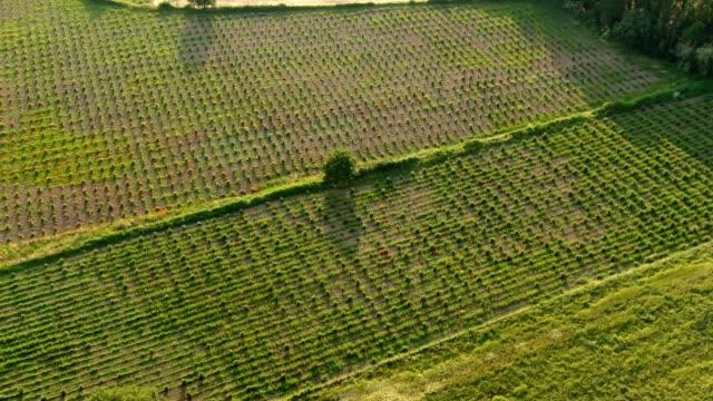 stockvideo's en b-roll-footage met luchtfoto van een cultiverende boerderij veld groeiende groenten. rijen van geplante groenten, omringd door percelen grond. - floral line