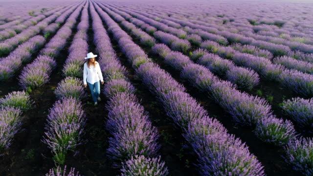 flygfoto över en bonde kvinna går genom hennes lavendelfält. - bulgarien bildbanksvideor och videomaterial från bakom kulisserna