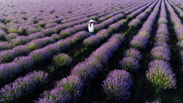 Aerial view of a farmer woman walking through her lavender field.