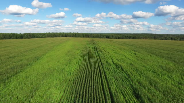 Aerial view of a field planted with corn video