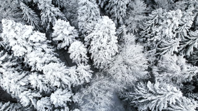 Aerial view of a forest in a winter cloudy day