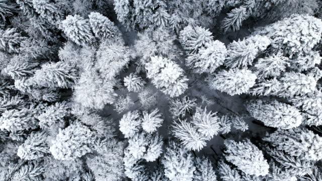 aerial view of a forest in a winter cloudy day - jodła filmów i materiałów b-roll