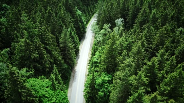 Video 4K HELI : aerial view of a forest in british columbia