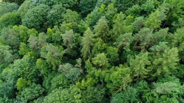 aerial view of a forest - дубовый лес стоковые видео и кадры b-roll