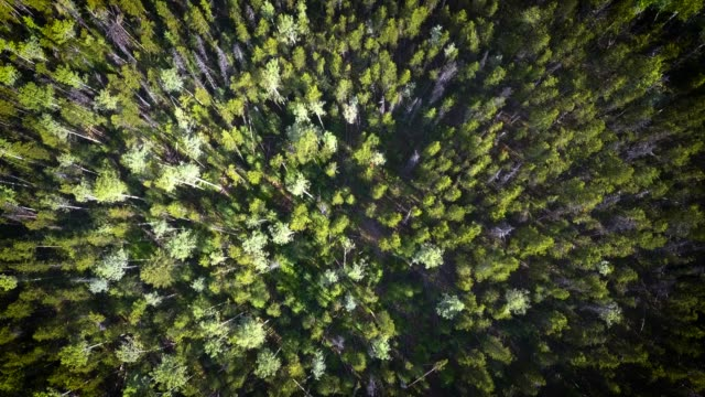 Aerial view of a large and dense forest