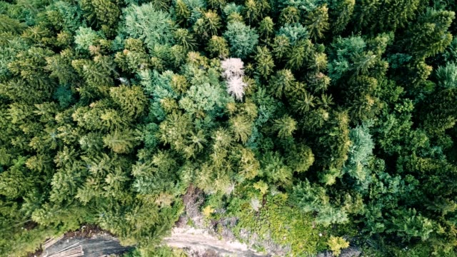 aerial view of a pine forest in switzerland video