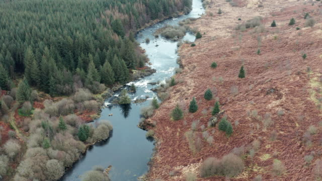 Aerial view of a Scottish river next to a forest on a dull overcast spring day video