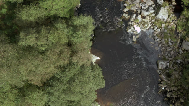 Aerial view of a small Scottish river in a forest 4K drone footage of a small Scottish river in a remote rural setting dumfries and galloway stock videos & royalty-free footage