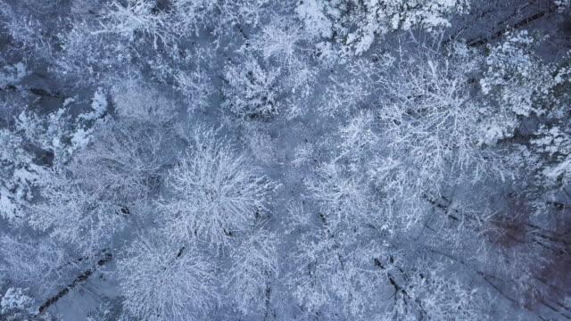 flygfoto över ett snö skogslandskap - pine forest sweden bildbanksvideor och videomaterial från bakom kulisserna