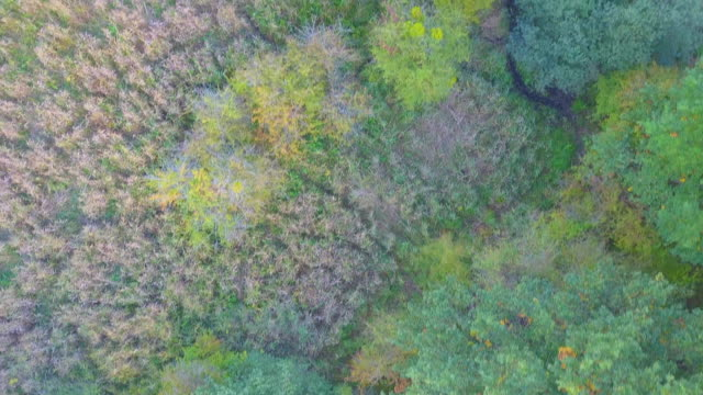 Aerial view of a the edge of the forest video